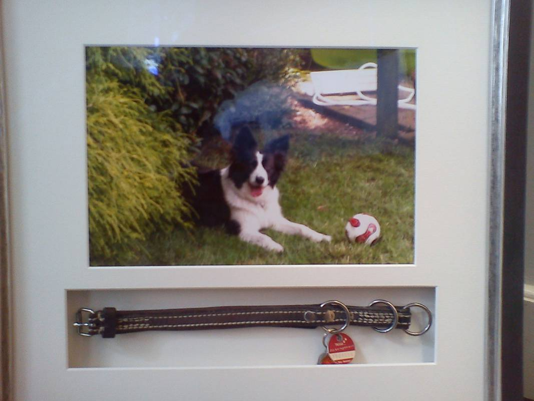 Objektbild Hundefoto mit Halsband